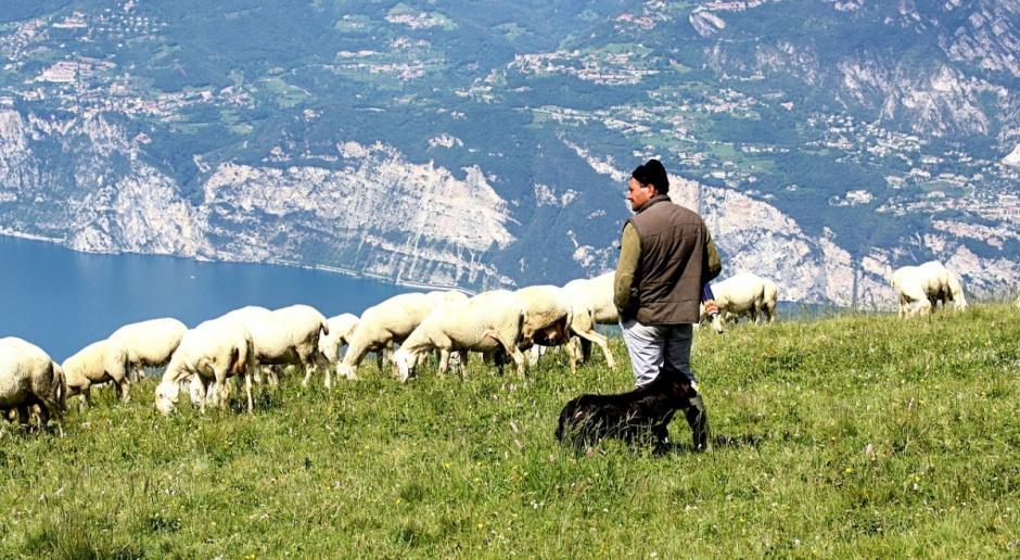 UE: Spadają ceny owiec i jagniąt