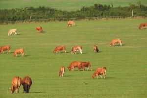 Wiosenne porządki na pastwiskach