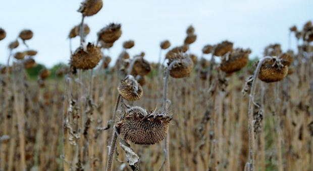 Rząd przyjął projekt noweli ustawy ws. ubezpieczeń rolnych