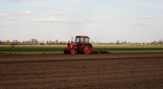 Rolnicy likwidują i przesiewają słabe oziminy