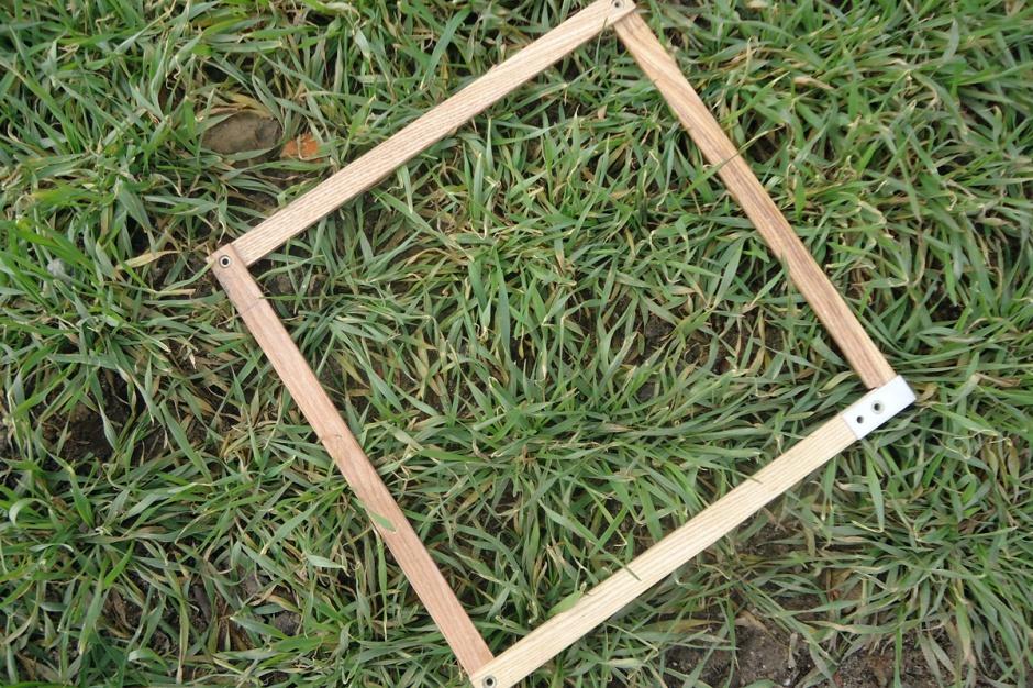 Nie ucierpiały zazwyczaj pszenżyta ozime z wyższą mrozoodpornością i odznaczające się jesienią dobrą kondycją. Fot. Anna Kobus.