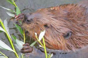 Otawski: rosną odszkodowania za szkody wyrządzane przez dzikie zwierzęta