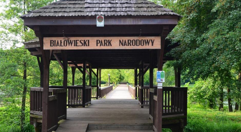 PO chce, by cała Puszcza Białowieska była objęta ochroną