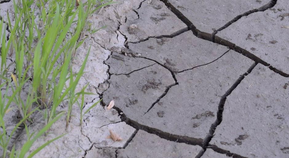 Resort rolnictwa chce zmienić sposób monitorowania suszy rolniczej