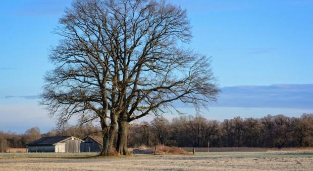 Senat: Głosowanie nad ustawą o obrocie ziemią rolną na kolejnym posiedzeniu