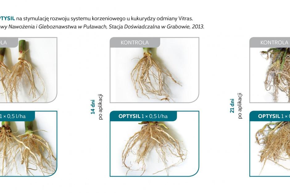Stymulacja rozwoju systemu korzeniowego
