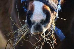 Senat za uszczelnieniem zasad rejestracji koni