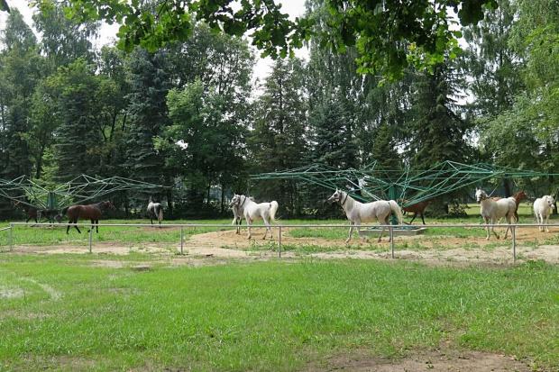 ANR: spółki hodowlane chcą renegocjować umowę ws. aukcji Pride of Poland