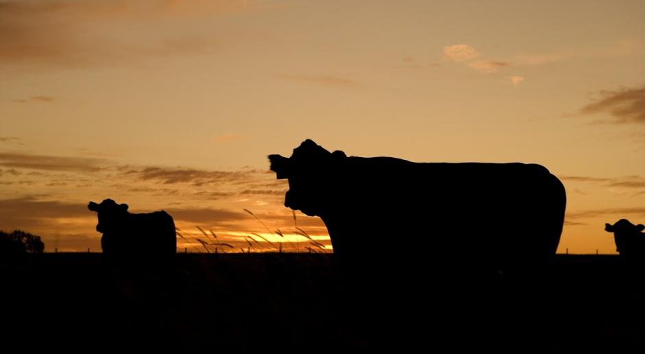 Na rynku mleka zaczyna realizować się czarny scenariusz