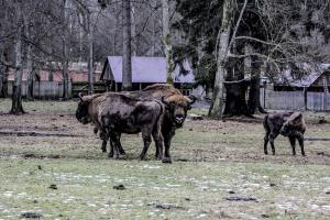 Szyszko w Białowieży: Główny cel - zahamować destrukcję siedlisk