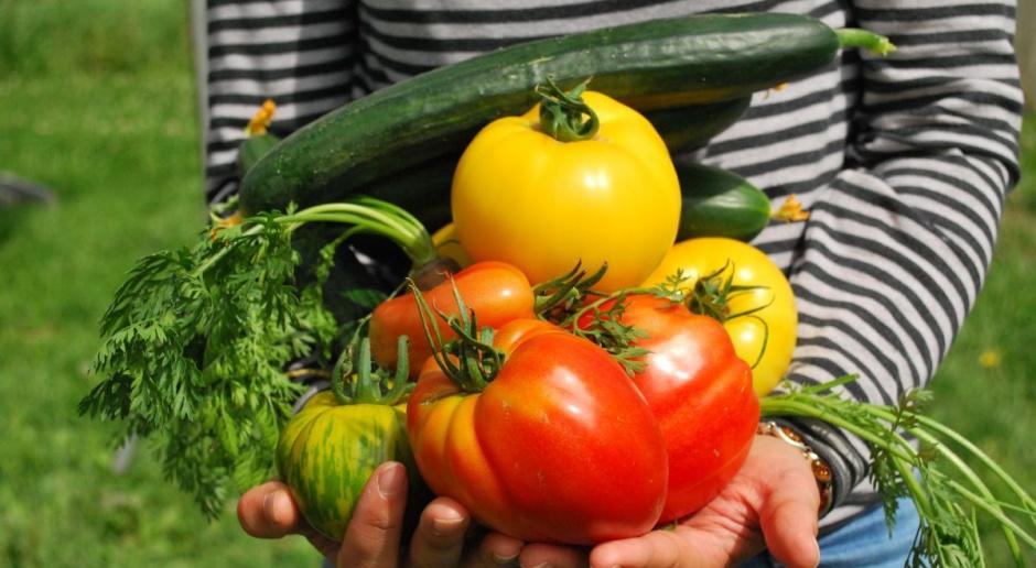 MRiRW: NIK wyjaśni nieprawidłowości przy obsłudze grup producentów owoców i warzyw