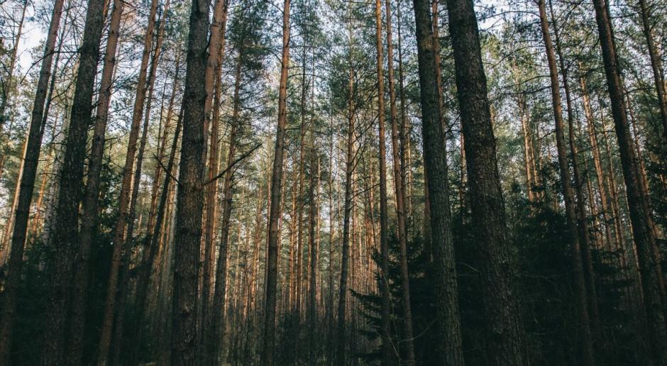 Sejm uchwalił nowelę pozwalającą na pierwokup prywatnych lasów przez państwo