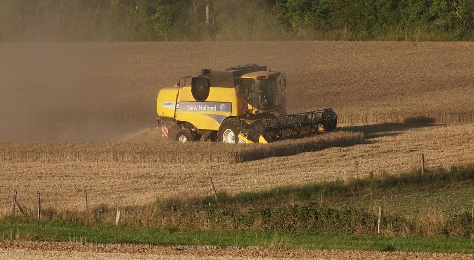 Niemcy: Prognoza zbiorów zbóż nieco wyższa od średniej
