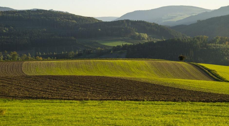Zbiory zbóż w tym roku na poziomie 28-29 mln ton