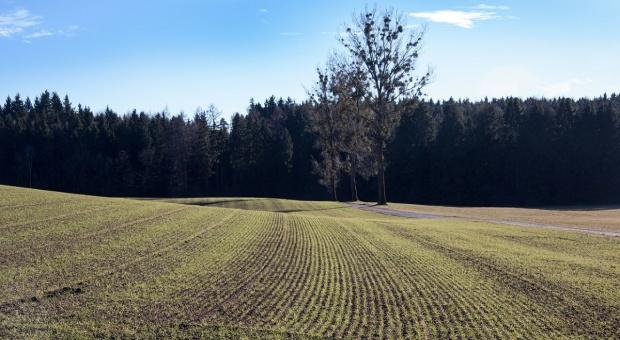 Rynek ziemi rolniczej w niektórych krajach UE
