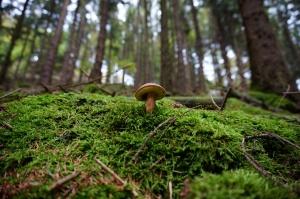 Senacka komisja środowiska - bez poprawek do noweli pozwalającej na pierwokup prywatnych lasów przez państwo