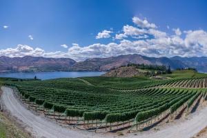 Spadła światowa powierzchnia winnic, a produkcja wina wzrosła