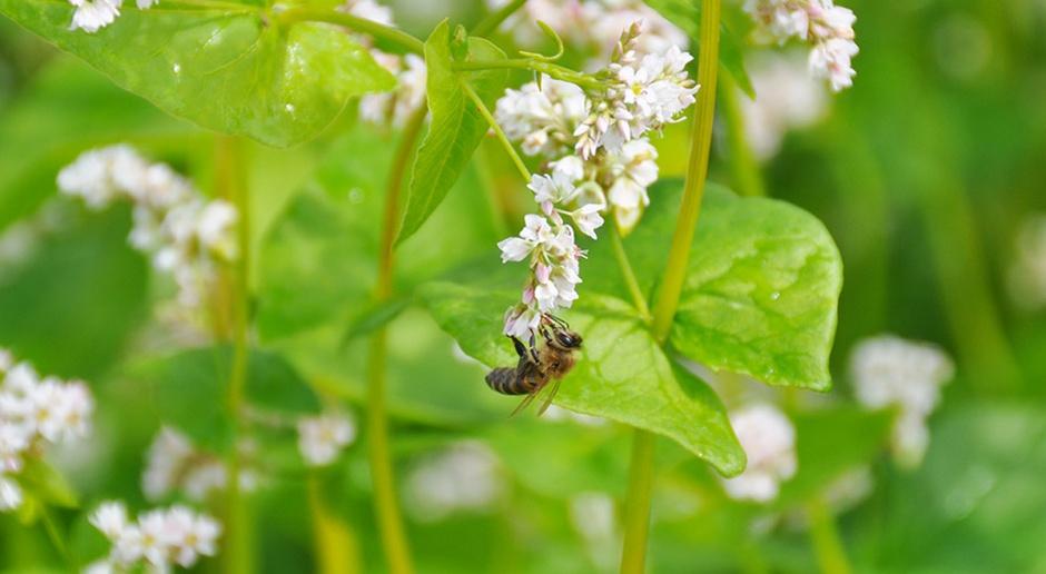 Pszczoły zasługują na szczególną ochronę