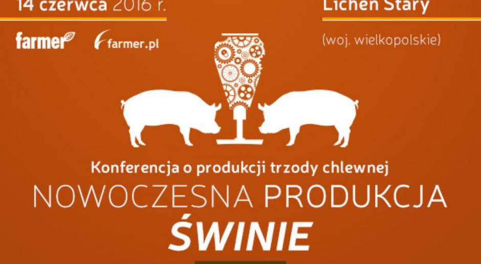 Nowoczesna produkcja – świnie