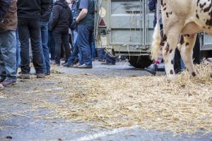 Węgry: Protest producentów mleka pod Tesco w Budapeszcie