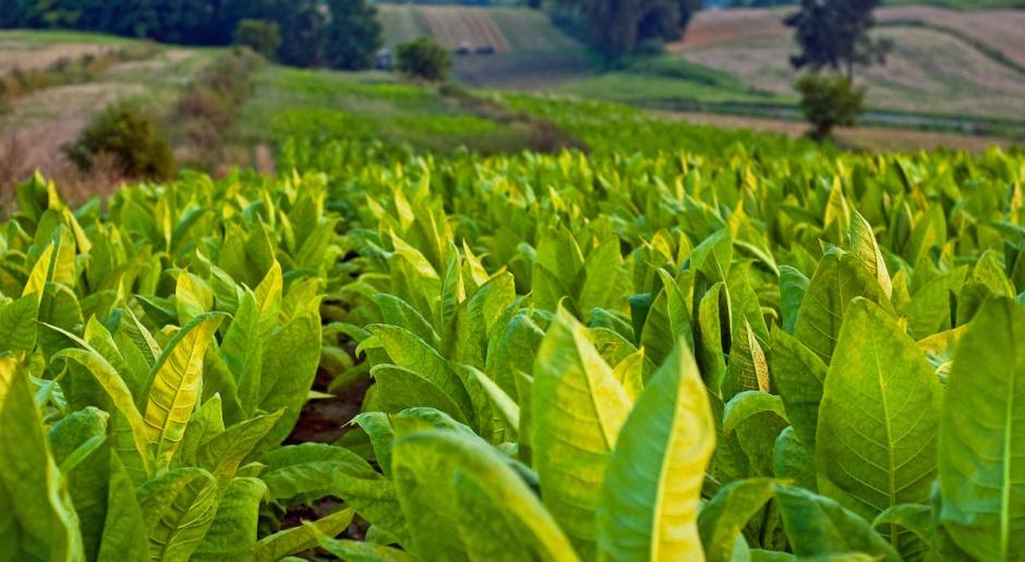 Projekt ws. zwolnienia pośredników tytoniowych z zabezpieczenia akcyzowego do podkomisji