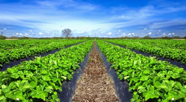 Węgry: Nawet połowę owoców mogły zniszczyć mrozy