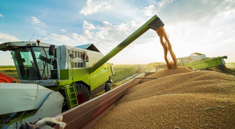 IERiGŻ: Zbiory zbóż wyższe niż przed rokiem, ceny na zbliżonym poziomie