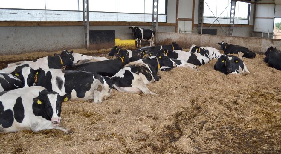 PFHBiPM: Spadek pogłowia krów mlecznych najwyższy od wejścia Polski do UE