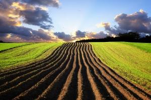 KOWR: w ciągu trzech kwartałów br. sprzedano 2,6 tys. ha gruntów