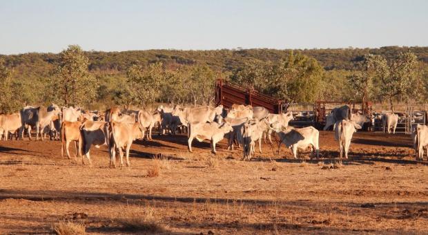 Australia: Więcej gruntów rolnych w obcych rękach