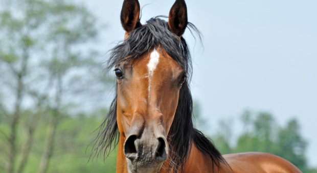 Minister rolnictwa powołał radę ds. hodowli koni