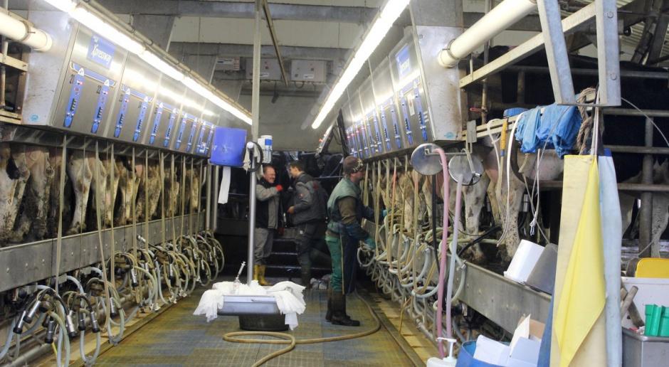 Czy coś w końcu zatrzyma spadek cen mleka?