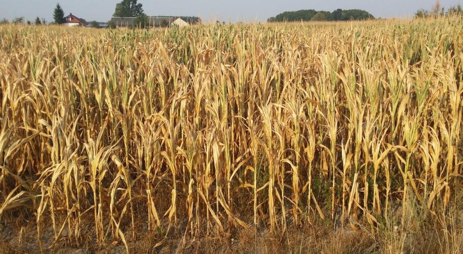 KRIR: Widać pierwsze symptomy suszy, może być gorsza niż rok temu