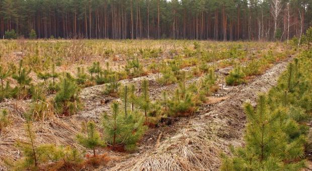 ARiMR znów sfinansuje lasy