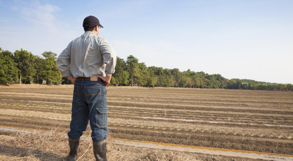 Rolnictwo było czy jest w zapaści?