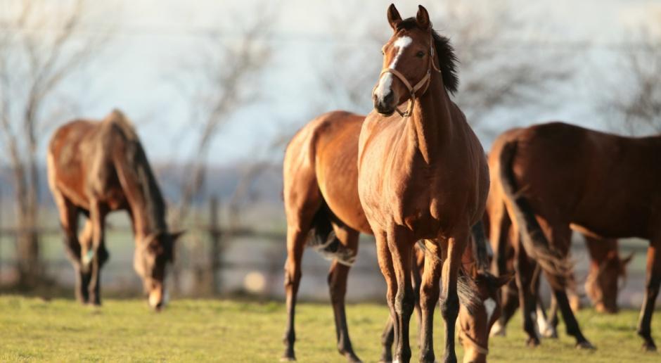 Rada ds. hodowli koni powołała zespoły robocze