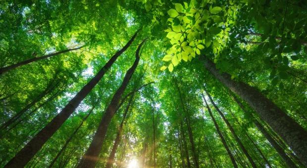 Greenpeace chwali rząd za umowę klimatyczną, gani za plany wobec Puszczy Białowieskiej