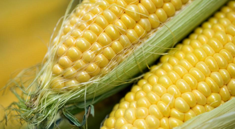 Kukurydza na CBOT najdroższa od ponad 7 miesięcy