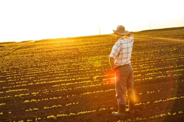 Rolnikom nie grozi niedobór witaminy D