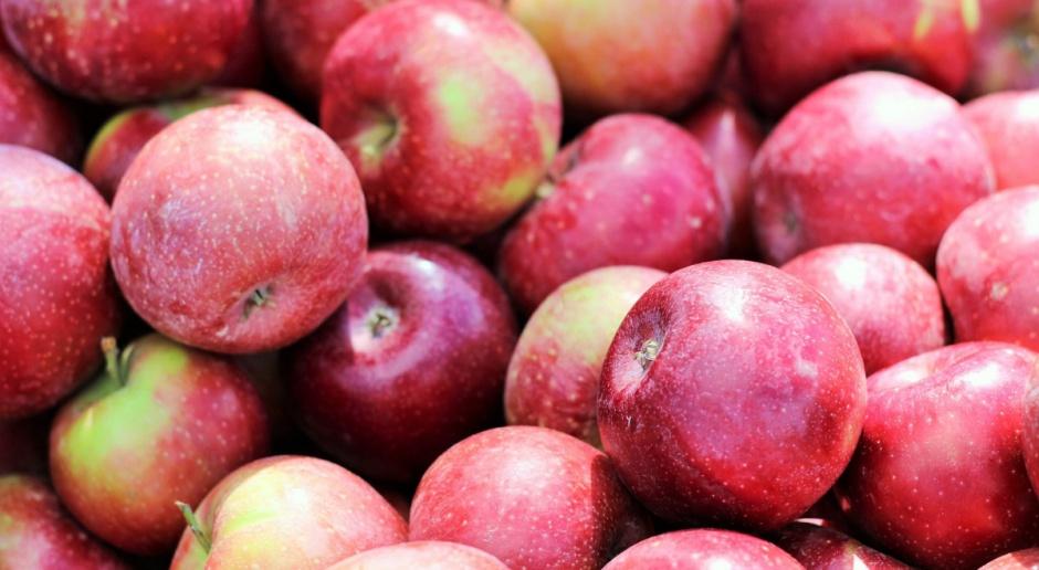 Produkcja jabłek będzie rosła. Za kilka lat możliwa nadpodaż o 3,0 mln t