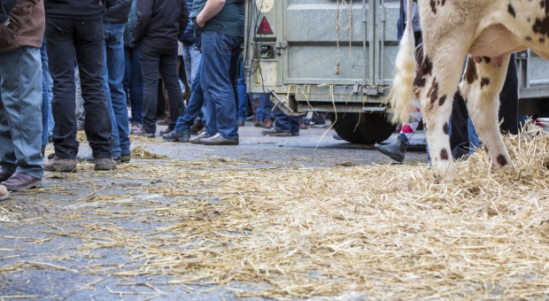 Protestują holenderscy rolnicy