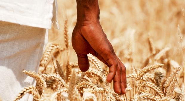 Rolnictwo to afrykańska tradycja