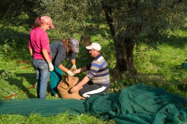 Włoski rząd zaostrza walkę z niewolniczą pracą w rolnictwie