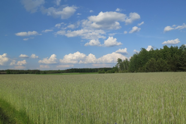 Sprzedaż gruntów ANR nie całkiem wstrzymana