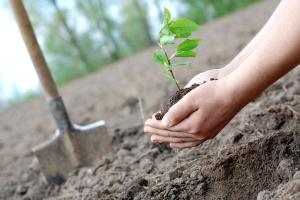 ARiMR przyjmuje wnioski na pomoc w zalesieniu gruntów