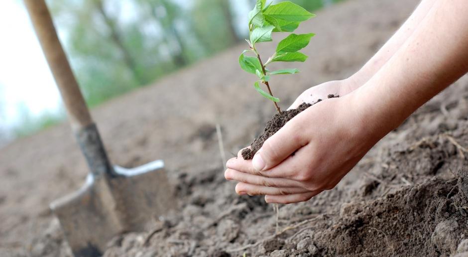 Od 1 czerwca nabór wniosków o dofinansowanie na posadzenie lasu