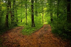 Agenci CBA weszli do Zakładu Informatyki Lasów Państwowych