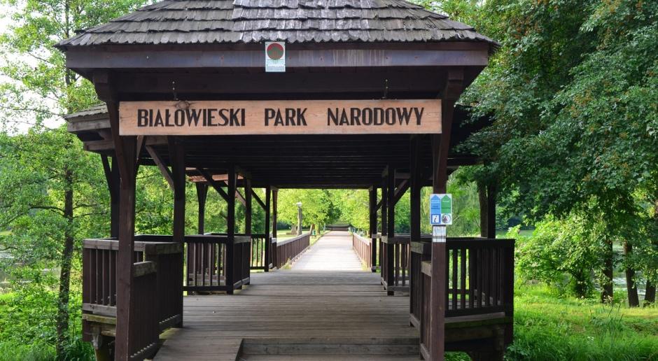Międzynarodowi eksperci w Puszczy Białowieskiej
