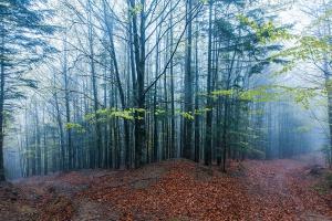 Podkarpackie: Inwentaryzują zasoby przyrodnicze lasów