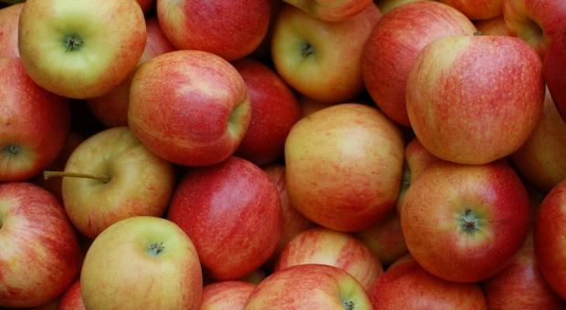 Polskie jabłka na Białorusi